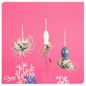 """Nos mignonnes créatures marines ont investi votre boutique Oya Fleurs. Inspirées des fonds marins, les """"tentacules végétales"""" se plairont particulièrement dans une pièce humide comme votre salle de bain afin d'apporter une touche ludique et de légèreté. . . . #jellyfish #fleuriste #oyafleurs #oya #flowershop #instafleurs #floweroftheday #plant #plantes #plantsplantsplants #plantlover #plantaddict #plantsofinstagram"""