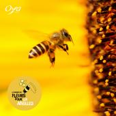 Face à la diminution des ressources pour les abeilles et les insectes pollinisateurs, à l'initiative de Val'hor, les fleuristes Oya fleurs sont les porte-paroles de la Semaine des fleurs pour les abeilles. Notre objectif est de vous sensibiliser et vous permettre d'agir avec nous en vous proposant une sélection de végétaux à disposer dans vos jardins, sur vos balcons ou terrasses. . . . #pollen #abeille #onseme #flowersforbees #fleursmelliferes #plantesmelliferes #semainedesfleurspourlesabeilles #oya #oyafleurs