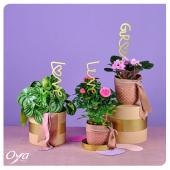 Pour les mamans qui ont la main verte, nous vous proposons une sélection de plantes : peperomia, rosier, saintpaulia, tillandsia, et plein d'autres à découvrir dans votre boutique Oya fleurs préférée ! . . . #maman #bonnefetemaman #plantsofinstagram #plantaddict #plantlover #urbanjungle #plant #plantes #plantsplantsplants #oya #oyafleurs
