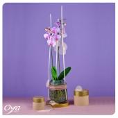 Tout en légèreté et transparence, l'orchidée papillon s'épanouit dans l'eau. De cette façon, l'entretien de cette belle plante fleurie est plus facile. Changez simplement l'eau quand celle-ci est trouble. - Petit plus, remplacez l'eau par de l'eau minérale pour apporter d'autres nutriments à votre plante. . . . #phalaenopsis #orchidee #plant #plantlover#plantsplantsplants #plantes #plantaddict #plantsofinstagram #oya #oyafleurs
