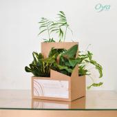Oya fleurs lance les INCROYABLES ! - Retrouvez chaque mois un produit inédit et imaginé par l'un des fleuristes du réseau. En septembre, Mauricette des boutiques Oya fleurs à Angers vous présente le kit de plantes pour le travail et/ou télétravail. Sur place ou à emporter,  il ne vous reste plus qu'à choisir entre le kit de plantes faciles ou le kit de plantes dépolluantes et bien d'autres à découvrir dans votre boutique Oya fleurs préférée ! - Pour quel kit allez-vous craquer ? Faites vite les kits de plantes sont en quantité limitée jusqu'au 19 septembre ! . . . #incroyablesoya #plantes#plante #savoirfaire #plantsplantsplants #plant #urbanjungle #plantlover #plantaddict #plantsofinstagram #florist #oya #oyafleurs