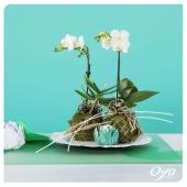 """Pour la collection Nymphéas, l'orchidée est réinterprétée en kokedama """"Sur la rive"""". Baignez simplement l'écrin de mousse une fois par semaine pour entretenir votre phalaenopsis. . . .#plantsplantsplants #plantes #plant #urbanjungle #plantlover #plantaddict #plantsofinstagram #orchidee #phalaenopsis #oya #oyafleurs"""