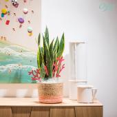 """On vous présente le sansevieria ! Cette plante tropicale, résistante aux fortes chaleurs sera idéale pour votre intérieur. Elle s'intègre parfaitement à la collection """" Horizon Corail """" de cet été : délicate, dansante et légère. La ressemblance avec une algue marine est frappante, non ? . . . #sansevieria#plantsofinstagram #plantaddict #plantlover #urbanjungle #plant #plantes #plantsplantsplants #oya #oyafleurs"""