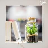 """Ce terrarium """"reflets en bocal"""" vous permet d'observer la nature s'épanouir et la lumière se refléter sur les feuilles de l'asplenium. Le petit plus : il est très facile d'entretien ! Vous aimez ? . . . #terrarium ##plantsplantsplants #plantes #plant #urbanjungle #plantlover #plantaddict #plantsofinstagram #oya #oyafleurs"""