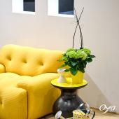Connaissez-vous l'hortensia ? Il est reconnaissable grâce à ses tiges lignifiées. Sa fleuraison très généreuse de juin à septembre est parmi l'une des plus belles fleurs à avoir dans son jardin, son intérieur ou son balcon. . . . #hortensia #fleuraison #été #jaune#floweroftheday #collections #plante #plantaddict #plantsofinstagram #plantlover #plant #plantes #oya #oyafleurs